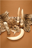 Leopard skins and ivory